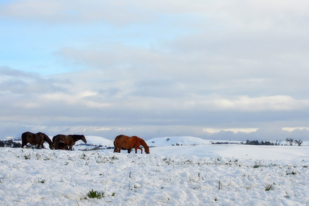 midlands-snow.jpg