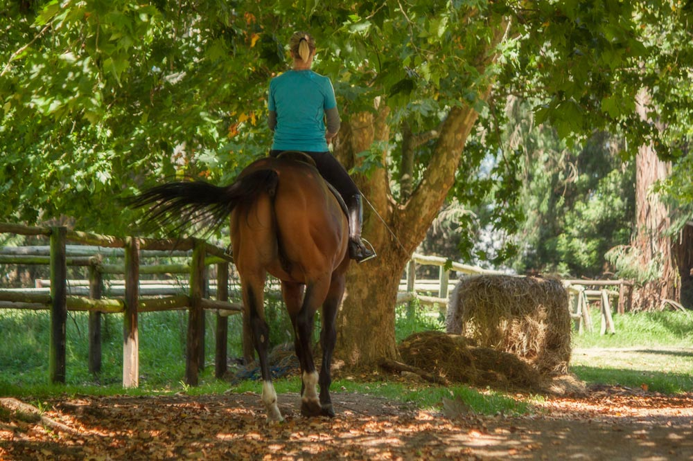 horse-riding-midlands.jpg
