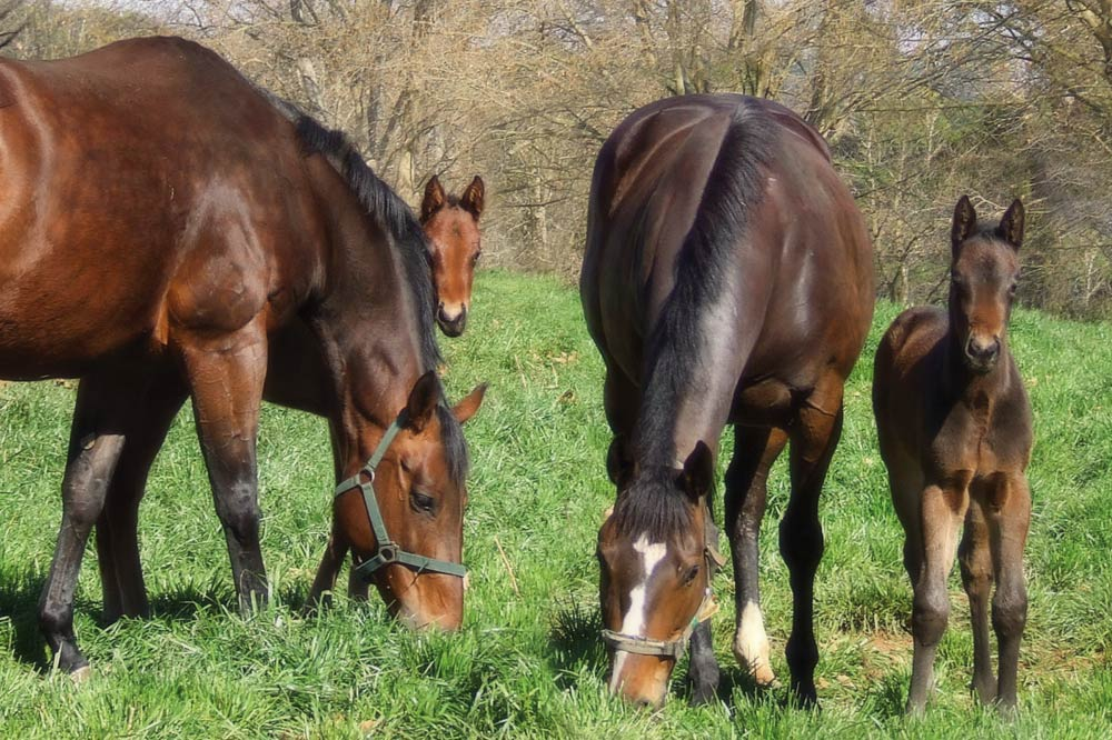 mares-and-foals.jpg
