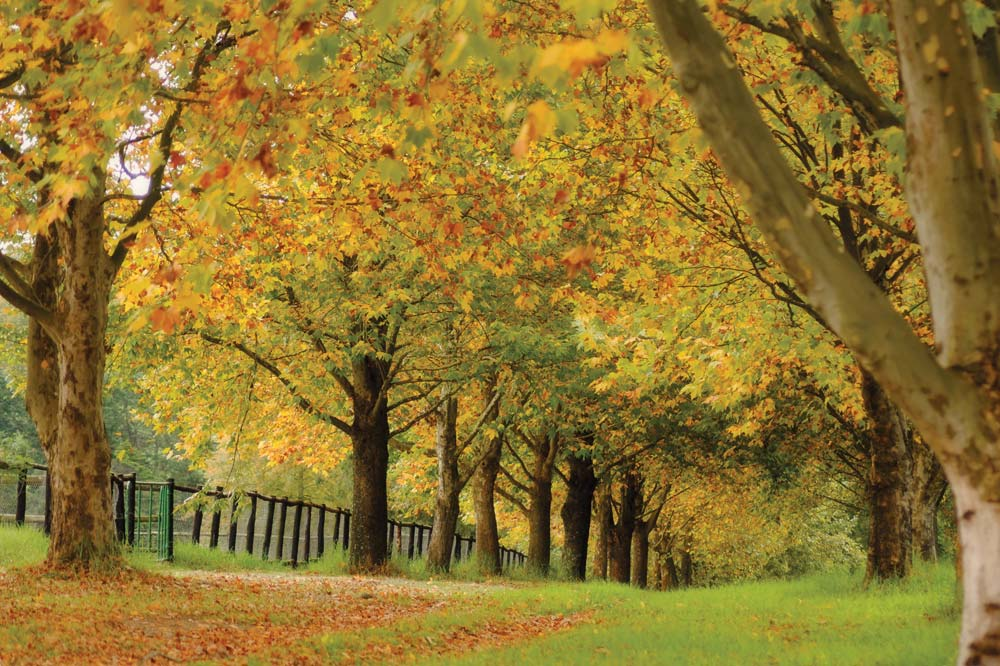 autumn-avenue.jpg