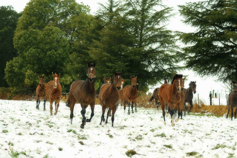 horses-running-in-the-snow.jpg