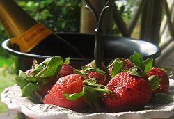 Strawberries and Champagne  Photo : Jackie Cameron