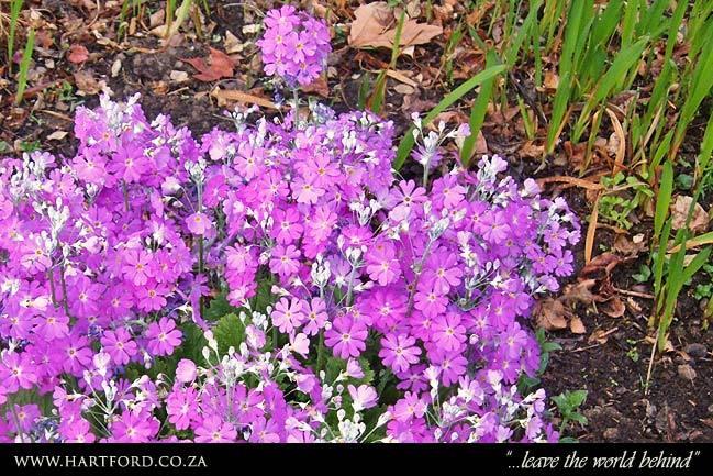 hartford-spring-garden-3.jpg