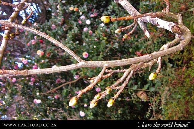 hartford-spring-garden-4.jpg