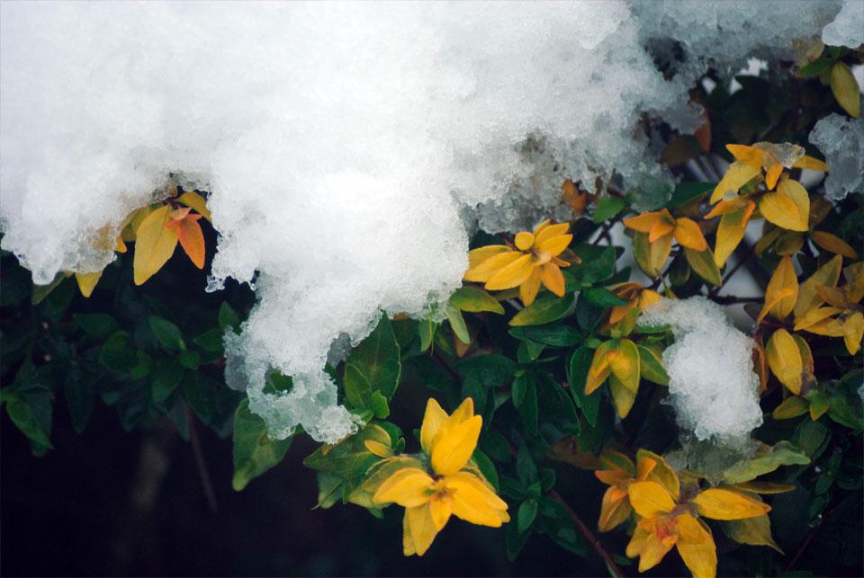 kwazulu-natal-snow-29.jpg