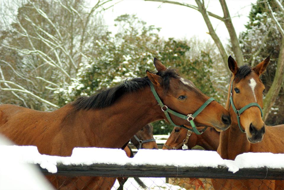 kwazulu-natal-snow-35.jpg