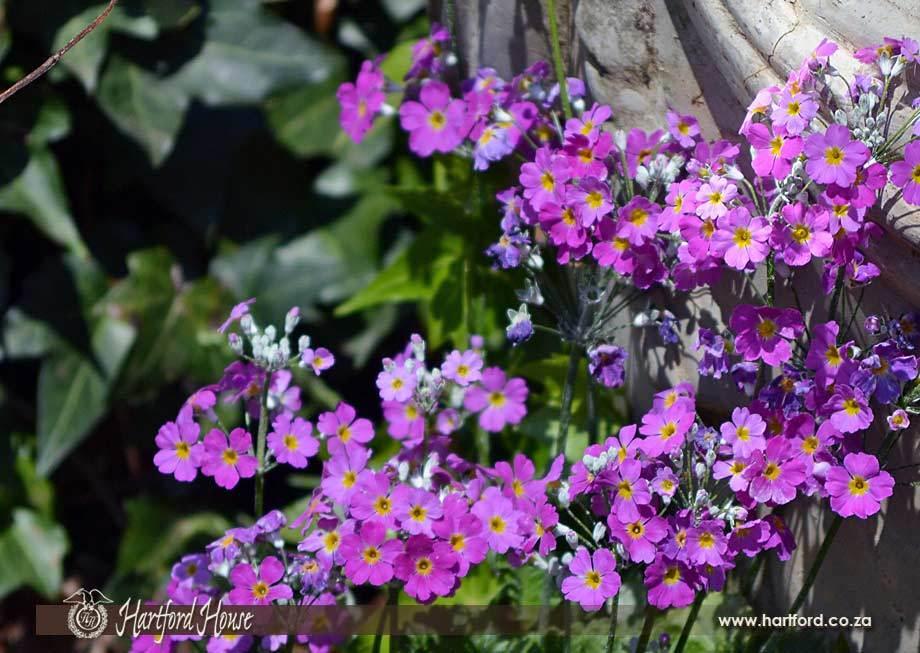 KZN Midlands Spring Flowers 9