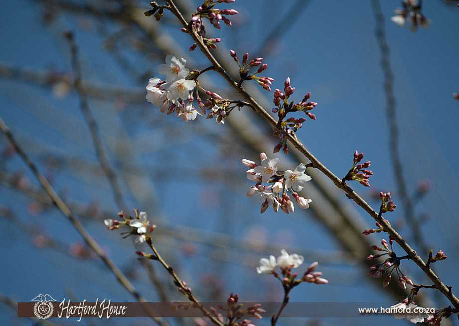 KZN Midlands Spring Flowers 17