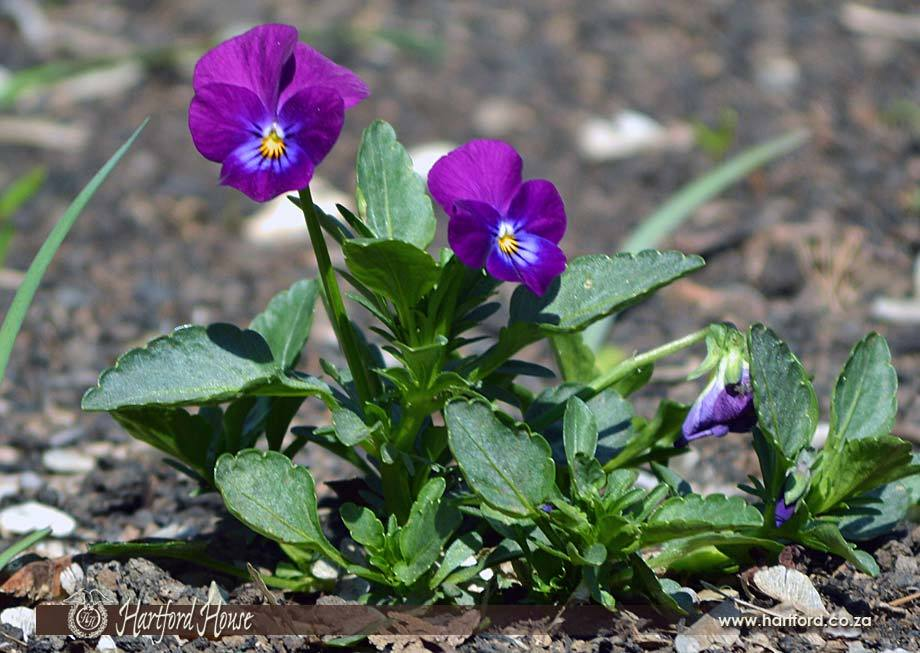 KZN Midlands Spring Flowers 22