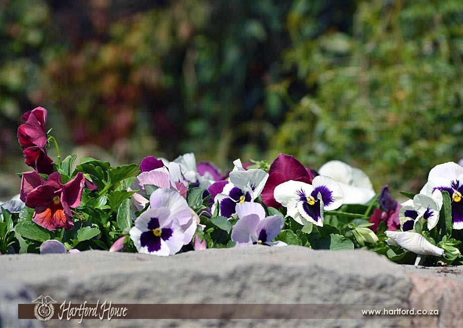 KZN Midlands Spring Flowers 6