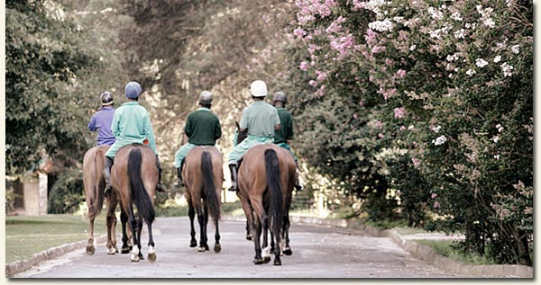 Out and about on the Summerhill Estate /Summerhill Stud (p)