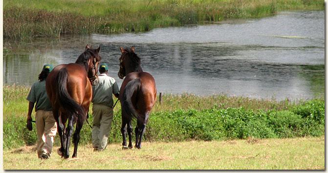 stallions_solskjaer_and_mullins_bay