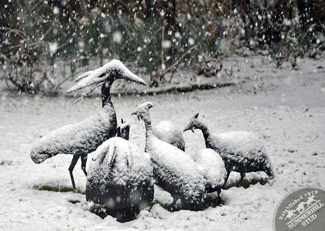 snow-august-2012-1.jpg