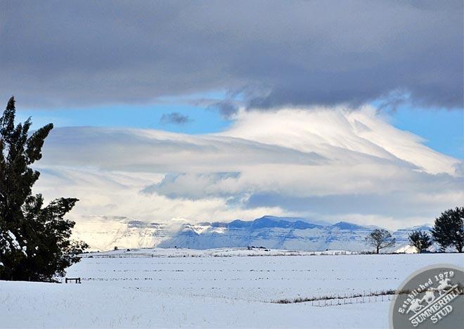 snow-august-2012-3.jpg