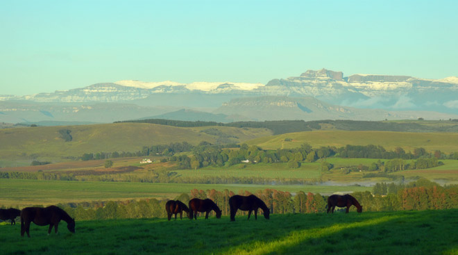 First snow on the Drakensberg mountains this morning / Leigh Willson (p)
