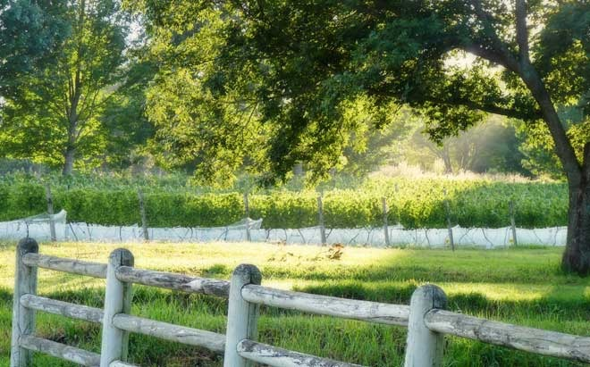abington-wine-estate-4.jpg