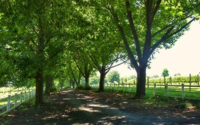 abington-wine-estate-2.jpg