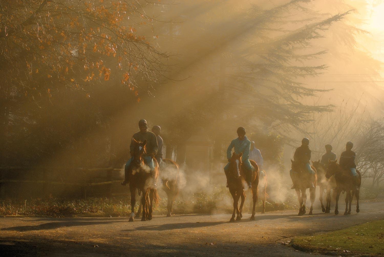 horses at hartford house