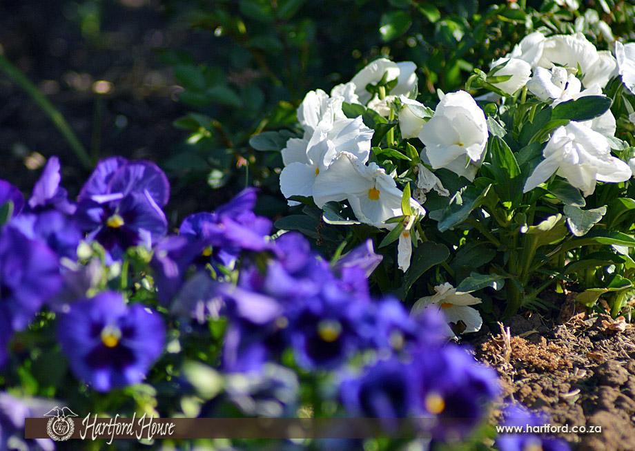 KZN Midlands Spring Flowers 10