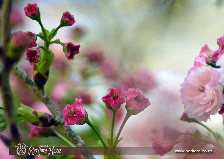 KZN Midlands Spring Flowers 15