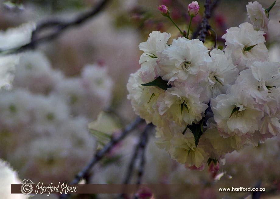 KZN Midlands Spring Flowers 18