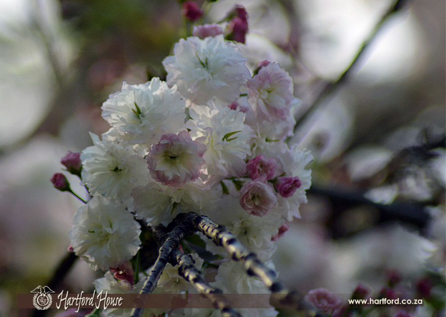 KZN Midlands Spring Flowers 19