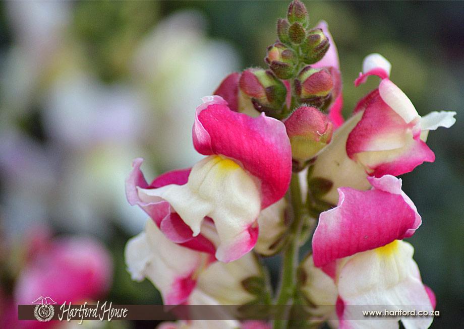 KZN Midlands Spring Flowers 26