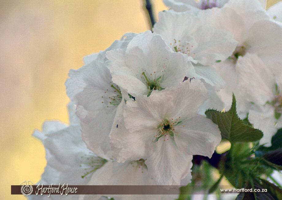KZN Midlands Spring Flowers 30