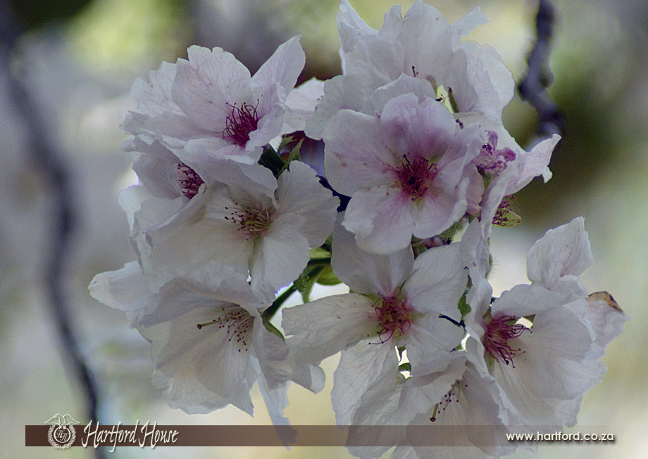 KZN Midlands Spring Flowers 31