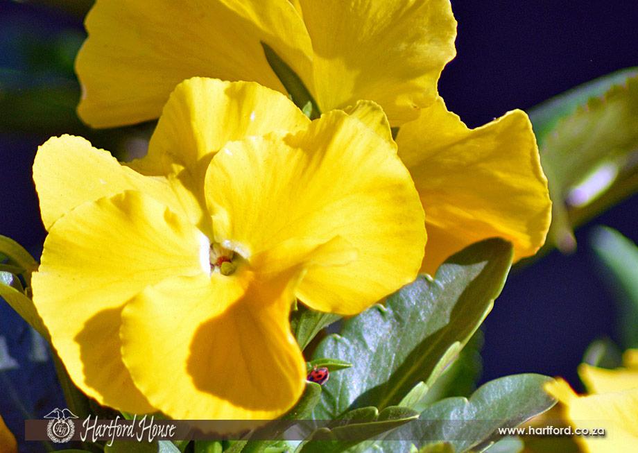 KZN Midlands Spring Flowers 35