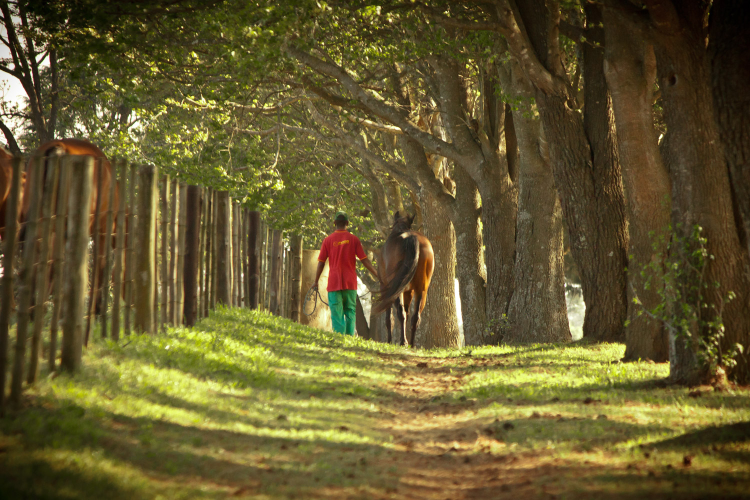 Horse and groom pass through one of the many enchanting avenues at Summerhill Stud / Leigh Willson (p)