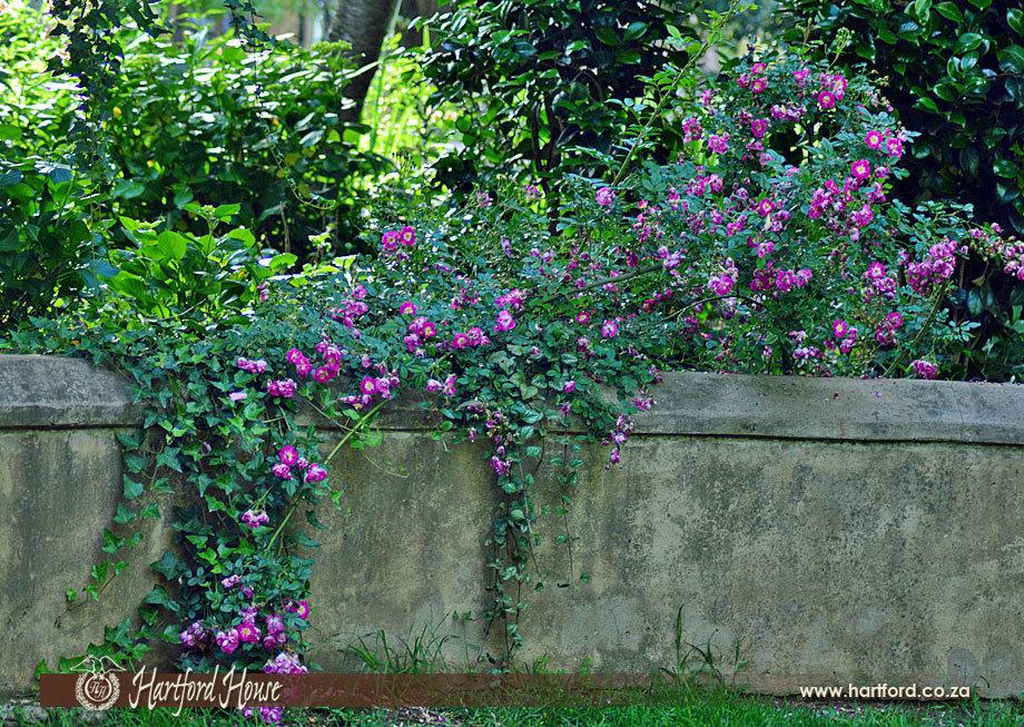 KZN Midlands Spring Gardens 1