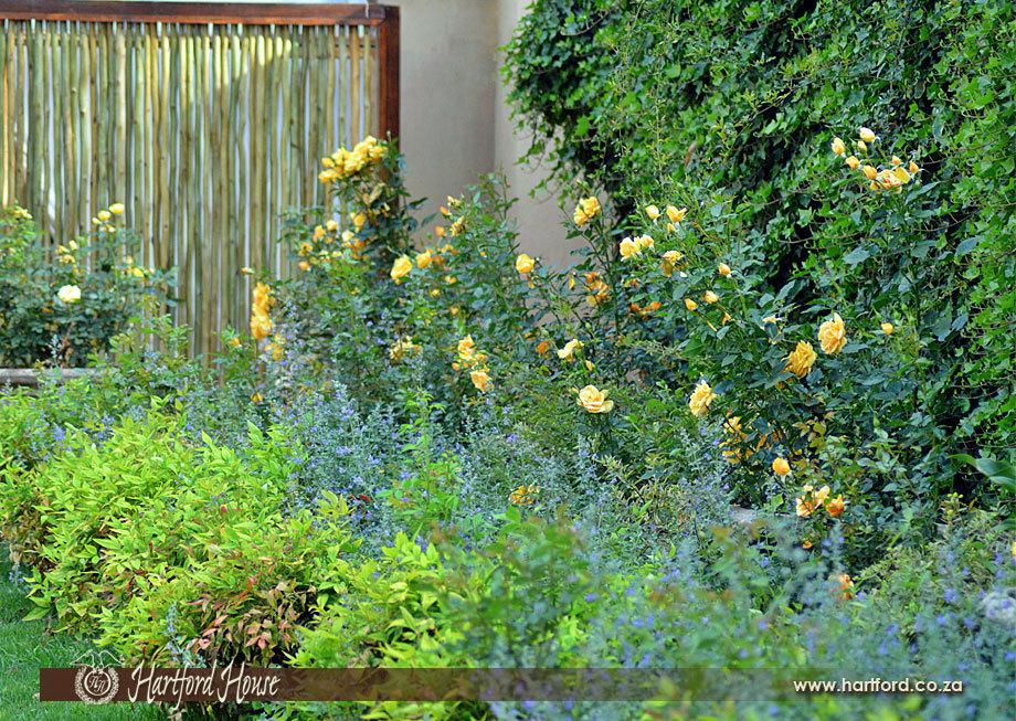 KZN Midlands Spring Gardens 13