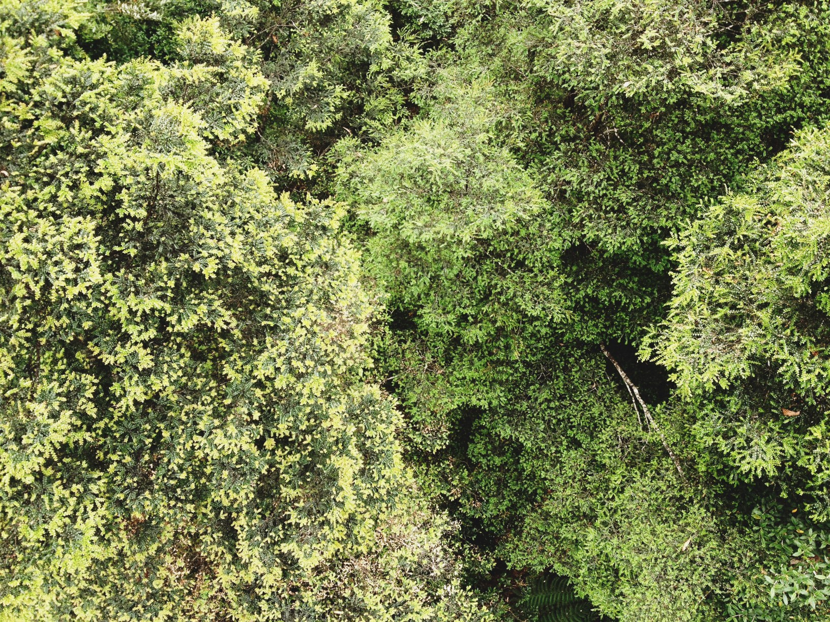 Canopy, Tahune Forest Reserve