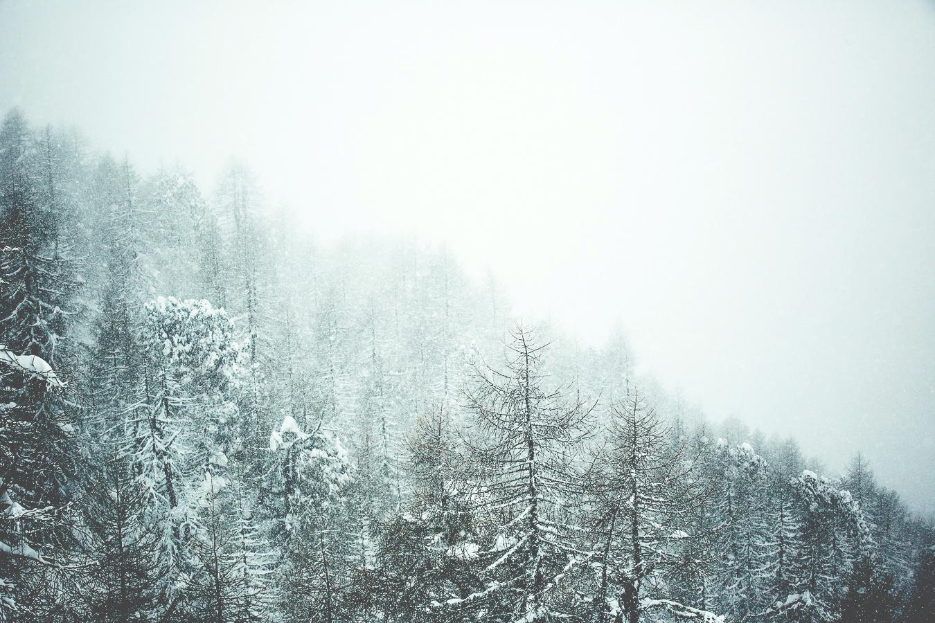 Woods_Snow_silvanoZeiter.jpg