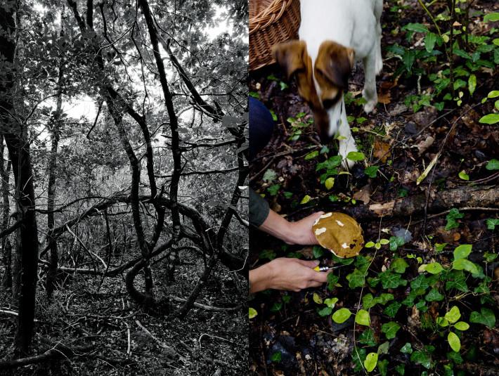 Mushroom Foraging and Ravioli Recipe - Eva Moon Press journal