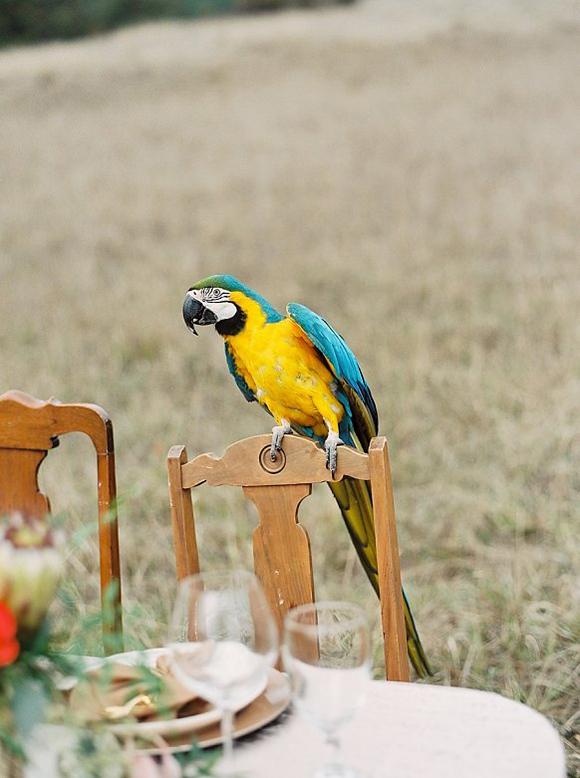 Safari Styled Wedding Parrot / Eva Moon Press