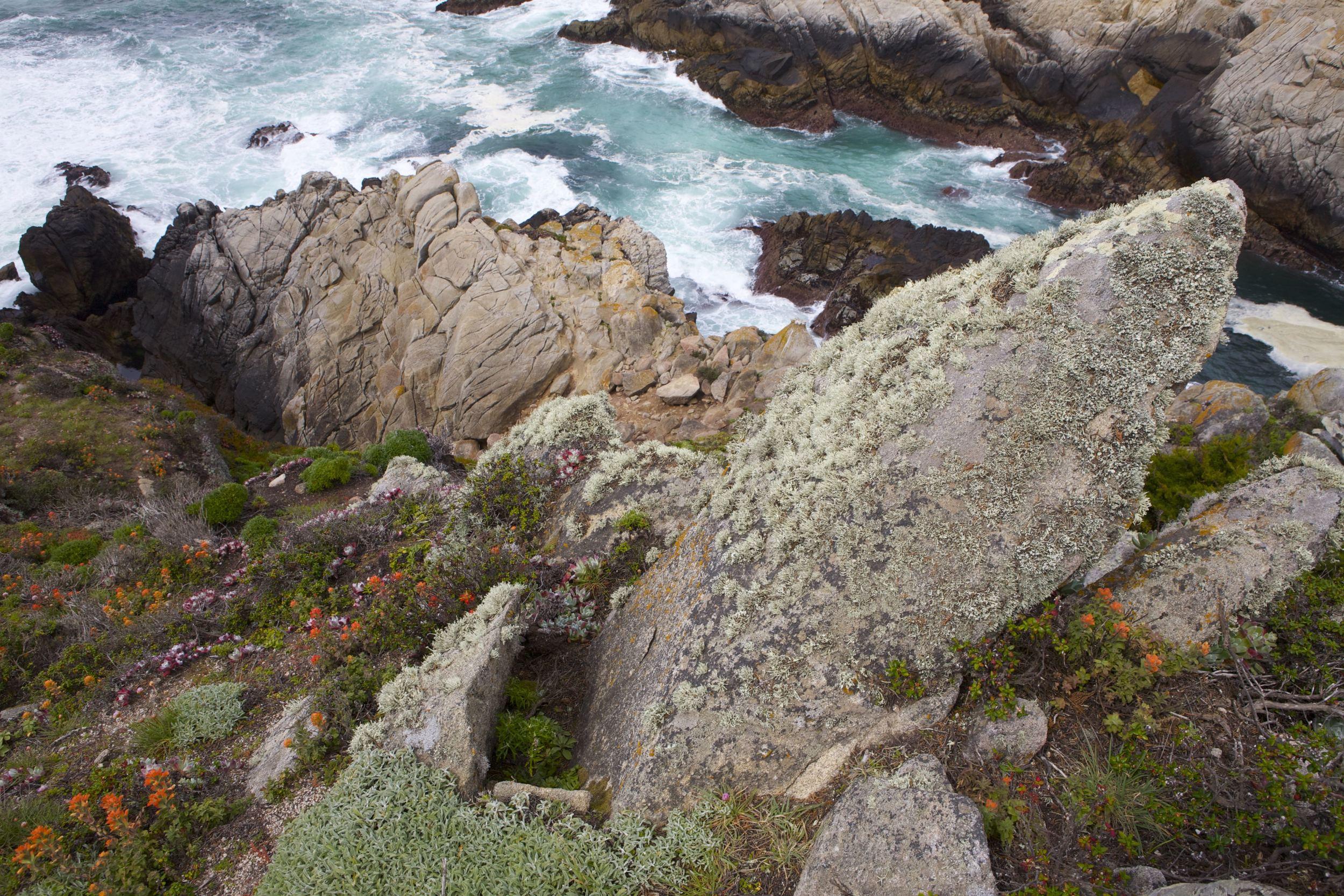 Point Lobos IMG_8550.jpg
