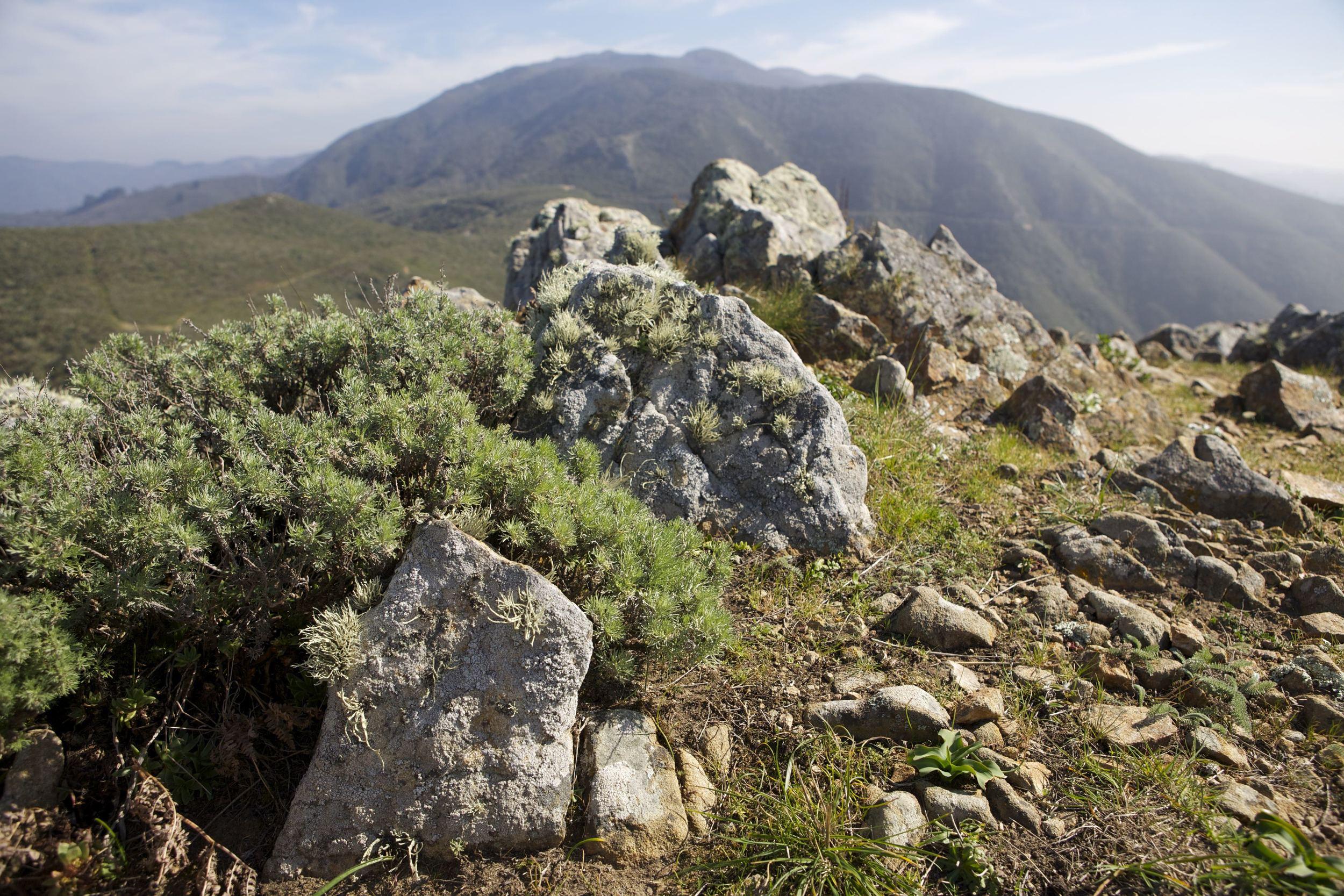 Montara Mt. IMG_0818.jpg