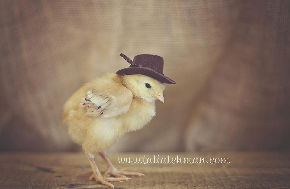Chicks 059WEB.jpg