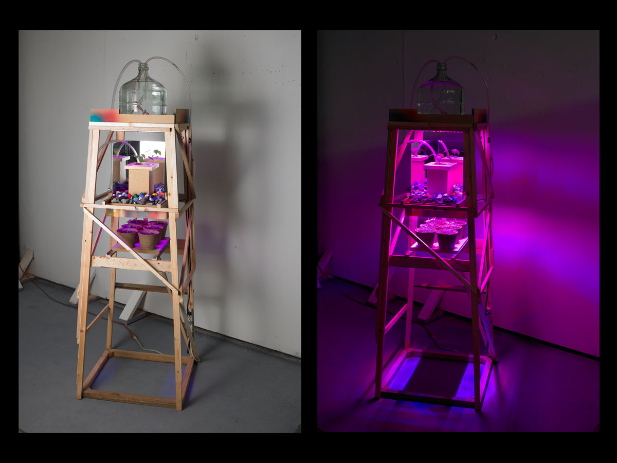 Untitled , 2011, LED grow light, wood, paint, rocks, plants, mirrors,