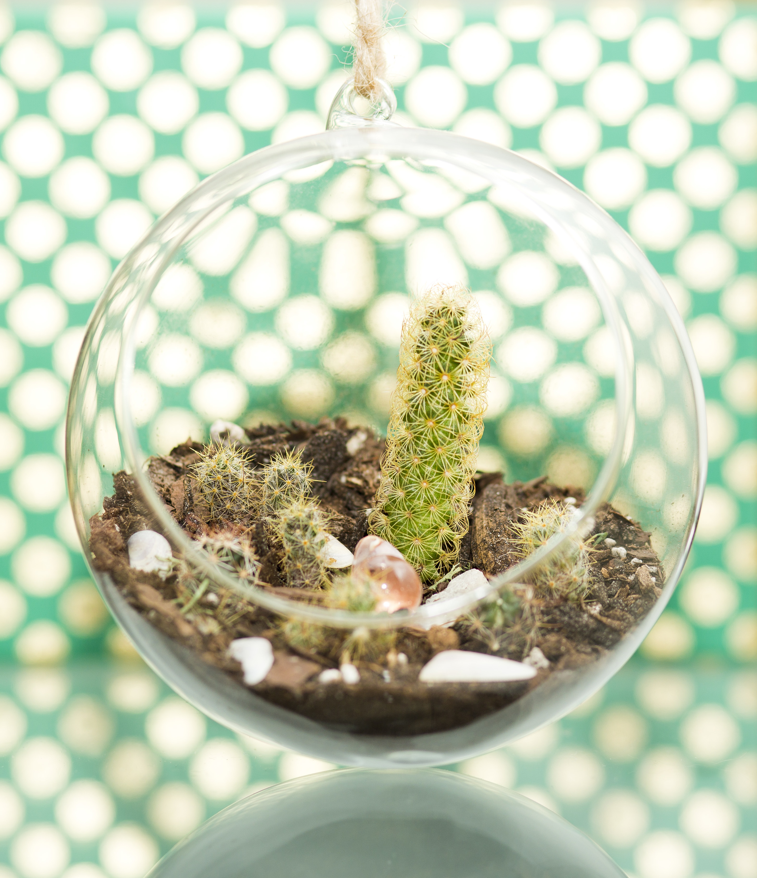 I spent my Sunday creating a mini photo set for my little cacti arrangement