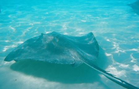 Visiting Stingray City off the north shore of the island was the highlight of the trip
