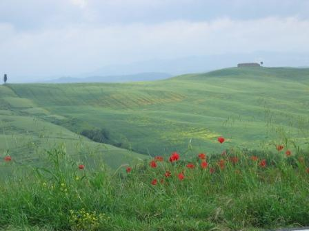 A stark yet scenic Tuscan landscape (which was a lot more green than gold, unlike the pictures you usually see.)