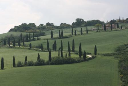 This is a famous cypress-lined road in Tuscany – and it took us a while to find it, especially since they don't bother to provide signs with road names on them in Tuscany.