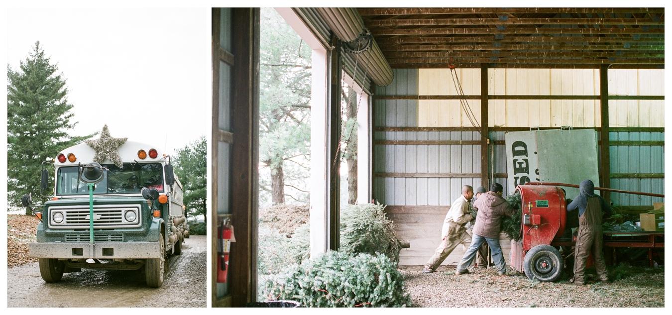 Christmas Tree Farm | Lily Glass Photography | Personal