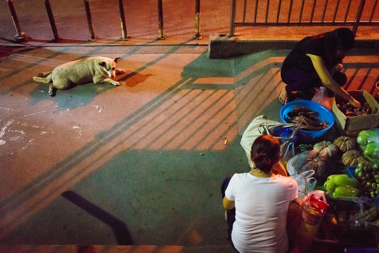 street_dog_bangkok