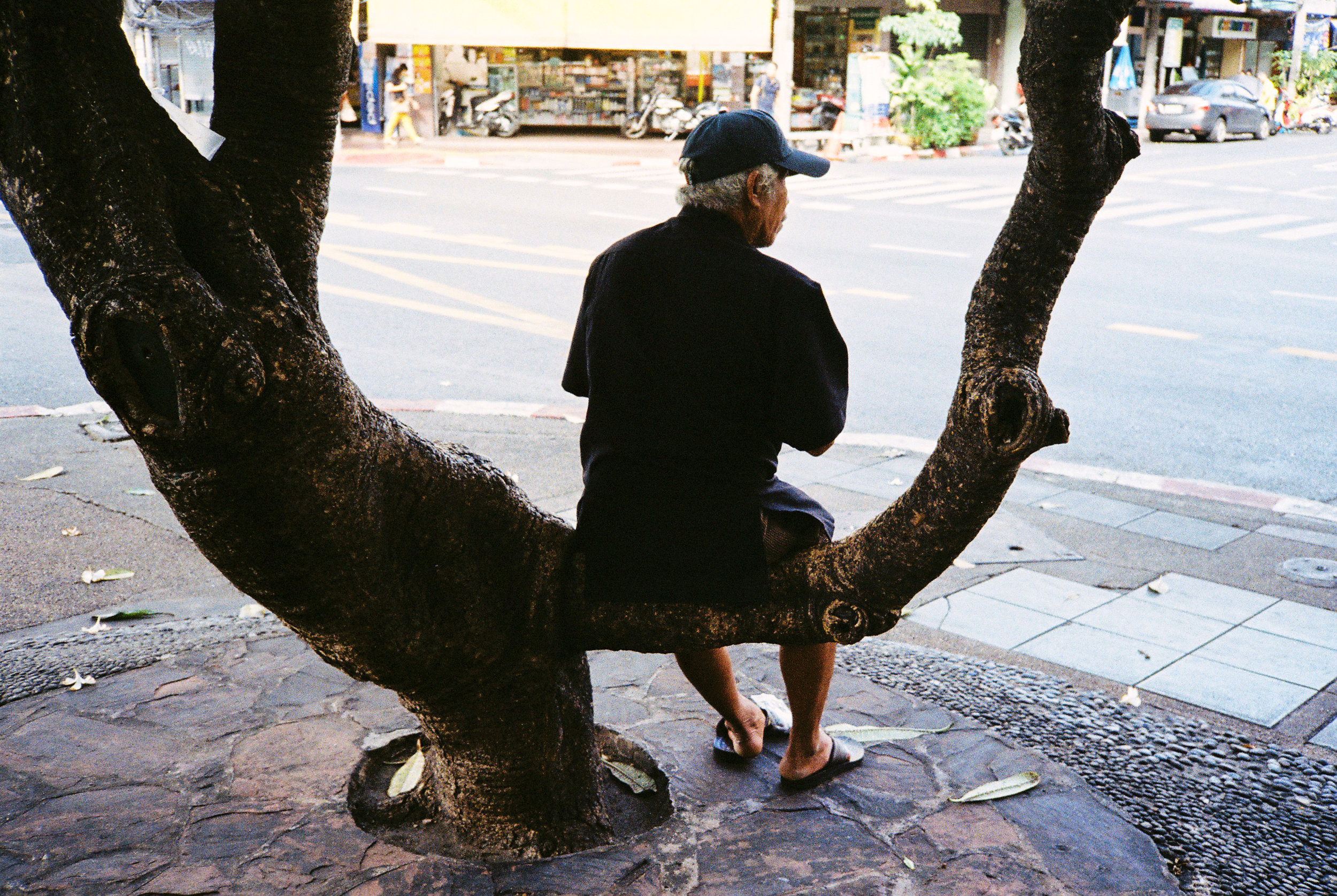 man-tree.jpg