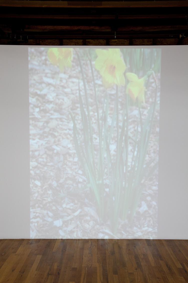 The Rite of Spring  2012  7 minute video loop  Dimensions variable