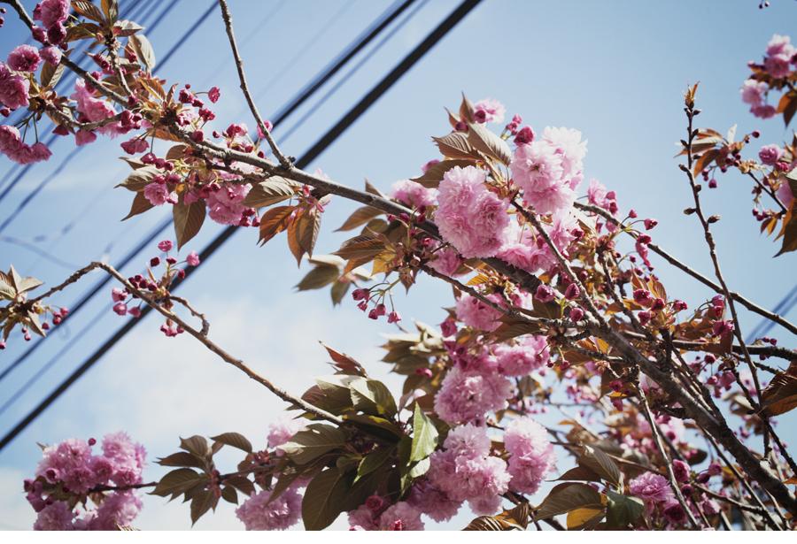 130406-10A LWR Blossoms 3251.JPG